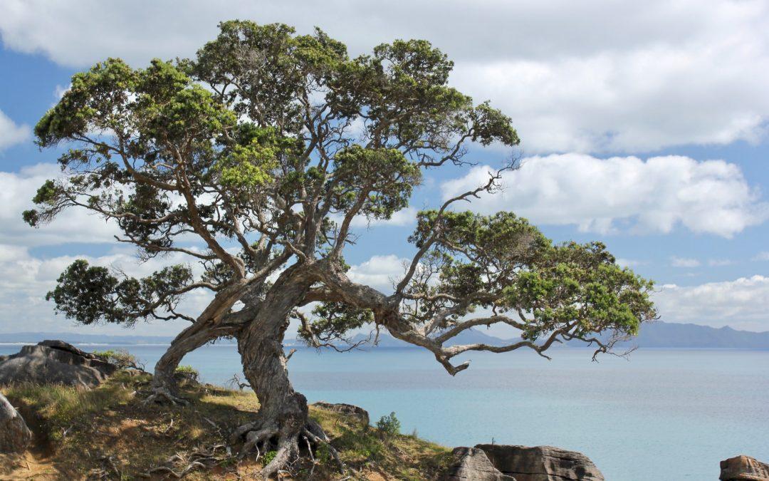 🌱Mecologico imita a los árboles y sigue fluyendo, reinventando.🌱